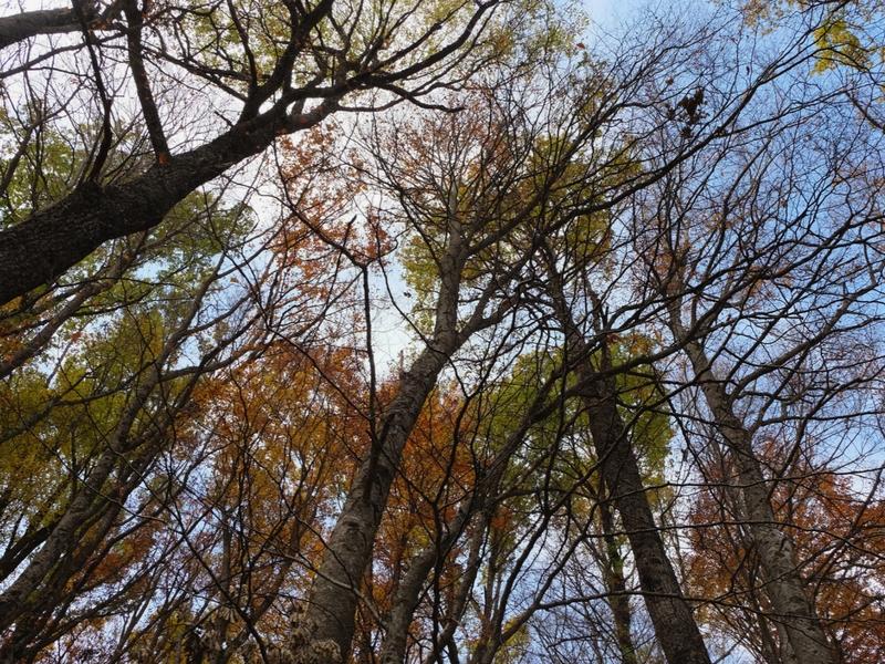 foliage-abruzzo-meditour-4