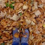 foliage-abruzzo-meditour-5