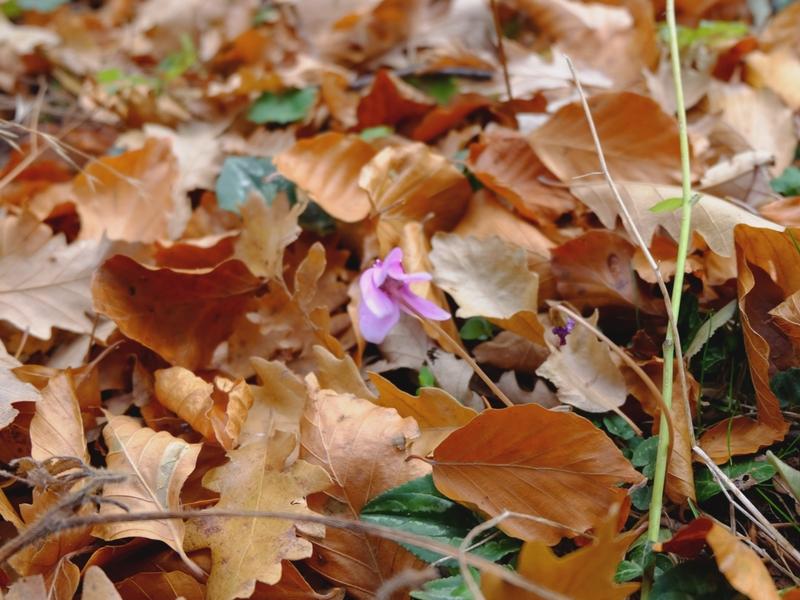 foliage-abruzzo-meditour-6